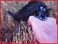 イノシシに拳銃で8発の銃弾を撃ち込んで倒すハンターの映像。ショック注意