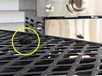 蜘蛛の狩り+まるで瞬間移動しているように見える蜘蛛の爆発的加速力。