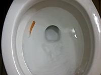 金魚をトイレに流すとどうなるのか。実験してみたビデオ。高3959低10650