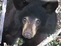 これはガチでヤバイ。熊から木の上に逃れるもギリギリまで迫られるハンター