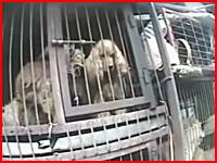 韓国の犬食文化。狭いカゴに入れられ食べられるのを待つワンコたちの映像