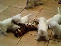 ネコ「ちょwwwタイム!待って!ちょwww待てってwwwぐあっ!うぐぐぐ」