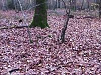 森の中を散歩していたらイノシシが突撃してキタ━(*´Д`)━!!これはカワイイ動画