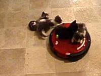 ルンバに乗せられた子猫たちが振り落とされていくネコネコ動画。かわゆす