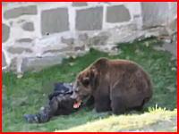 ぎゃああああああ!クマの檻に進入した男性がガチで襲われている衝撃映像