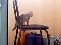 この猫ワロタ。約40秒間も延々と焦り続けている猫さんを撮影したビデオww