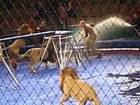 サーカスのトレーナーがライオンに襲われる衝撃映像2013。これは怖いな。