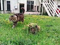 おまえは特殊部隊かwww草花で巧みにカモフラージュするニャンコwww