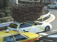 なんじゃこりゃ!?渋谷で撮影された屋根の上に巨大な物体を載せて走る車