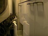イリュージョンな猫www可愛いすぎワロタwww幸せwww