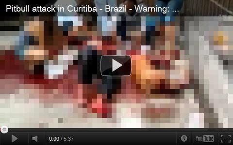 再生注意。ピットブルに噛まれて大量出血。横たわる男性と到着した救助隊