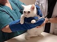獣医さん動画。ネコに注射をするのはこんなに大変!ニギャアアアアアア!