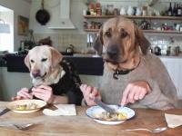 イヌなのに段々と犬に見えなくなるイヌイヌ動画。人犬羽織でお食事タイム