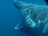 でけええええ!海でカヤックしてたら世界で二番目に大きな魚に遭遇しちゃた