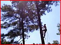 うめき声が怖い(@_@;)木の上で作業していた男性が落下して背中を骨折
