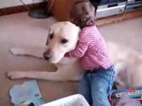 大ワンコと小ニンゲンのほのぼのビデオ。これは幸せすぎるなあ(*´Д`)