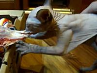 生肉に食らいついて離さないネコが完全に化け物に見える。コエーヨ(@_@;)