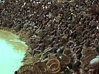 世界のお勉強動画。ドゴン族(マリ)のナマズ取り祭りのムービーが凄いぞっと。
