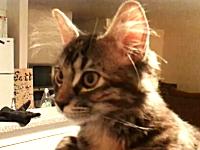 このネコ糞カワイイwwwと海外で話題になっているニャンコちゃんのビデオ。