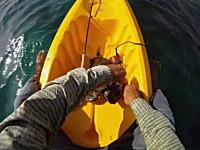 これは竜宮城あるで。廃棄された漁網に絡まったウミガメを助けるカヤック乗り