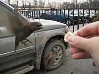 トリトリ動画。ホバリングして餌を貰う器用なスズメたちのムービー