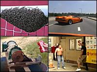 1000mg小ネタ集Part.60。サブイボ動画。クロスバーにミツバチのコロニーが。