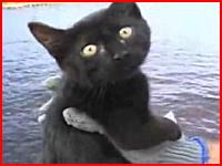 これは本物か?子猫に釣り針をつけてサメ釣りの餌にする酷すぎる映像