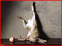 ウジウジ動画。蛆虫がウサギの死体を解体していく早送り映像。再生注意
