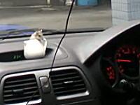 ハムスターと一緒にドライブしてみた。ハムさん可愛いけどちょっとあぶねえw