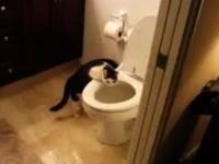 家の水道代がとても高い!と思ったら犯人はペットの猫だった(*´Д`)