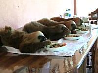 なにこれカワイイ。ナマケモノのベイビーがとってもカワイイ動画。変な生き物