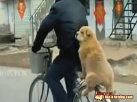 こんな乗り方できるんだ。犬らしくない格好で自転車の後ろに乗ってるワンコ