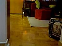 秘儀壁蹴り方向転換。ネコの身体能力の高さがうかがえる4秒の一瞬動画。
