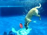 水中での動きが凄いイヌイヌ動画。プールの底に沈んだ玩具を引き上げる
