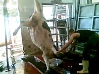屠殺とは。食肉処理場の作業の様子。牛さんが殺されてから牛肉になるまで