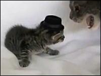 子猫に本気のパンチを浴びせる母ネコ 子猫はぜんぜん悪くないよう(´・д・`)