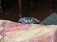 そ~っと覗いてそ~っと隠れるニャンコが可愛い動画。めっちゃ確認してるw