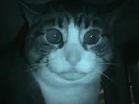 ニャンコを怒らせると怖い。ブチギレたニャンコの映像集。高速ぬこパンチあり
