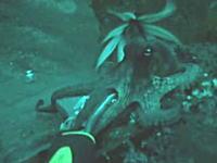 海の世界怖ええ!エイリアンvsエイリアン タコがイカに食われる瞬間の映像