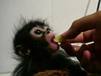 ほのぼの。お猿の赤ちゃんの食事シーンが可愛すぎて幸せになるビデオ。
