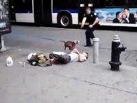 銃の発砲音って凄いな。向かってきた犬に至近距離から発砲する警官。NY