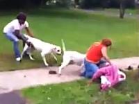 歩道で2匹のピットブルに襲われる女性。犬は駆け付けた警官に射殺される。