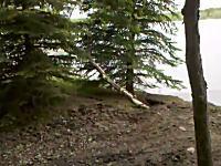 侵食。川岸の木が削り取られていく瞬間。こうして川の流れは変わるんだな
