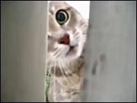 ヤバい。本気になったニャンコは怖いwww猫に襲われるカメラマンwww