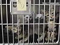捨てられたイヌやネコたちの最後。「殺処分」のリアルな映像。再生注意