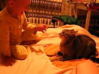 人間の赤ちゃんの強烈ビンタが炸裂してキレるネコさん。赤さんvsネコ動画