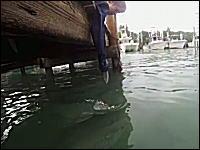 少年vs巨大古代魚。少年の伸ばした袖を巨大ターポンがばーん。びっくりした