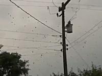 これはキモい。空中に黒いぶつぶつがあると思ったらそこらじゅうに張り巡らされた蜘蛛の巣だった。
