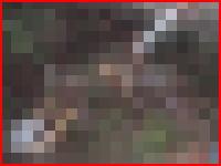 バリの日本人女性殺害事件で地元テレビが遺体と顔写真を放送する