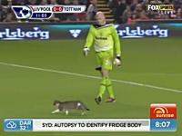 サッカープレミアリーグの試合にネコが乱入してネットで人気に。かわいい。